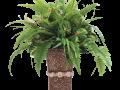 Plant (RGB).png