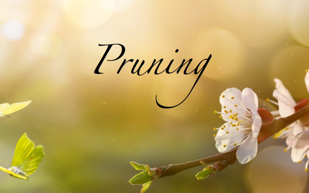 Pruning to GROW…