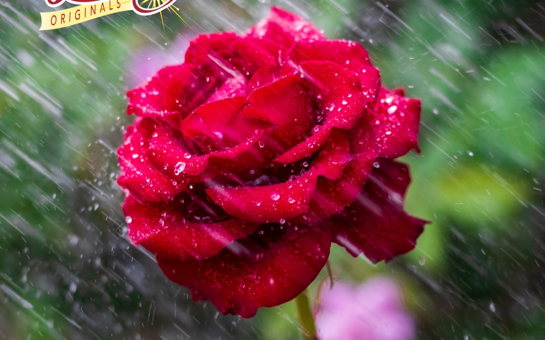 Beauty in the Rain…